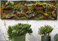 Vertical Succulent Wall Painting for my garden. Live Art: Paintings of Succulents Arte Viva: quadros de suculentas Succulent Wall Planter, Vertical Succulent Gardens, Vertical Garden Wall, Planting Succulents, Planters, Succulent Ideas, Succulent Gardening, Succulent Plants, Outdoor Wall Art