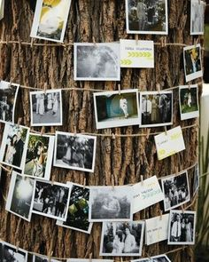Wrap brown string around tree and use clothes pins for pics  ****OLD PICTURES OF ME AND ROY UNTIL NOW**