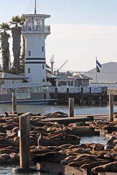 A number of years ago the seals moved in and the boats moved out. Pier 39, San Francisco, California
