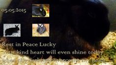 Kaninchenfan Lucky - Mein Kaninchenloch: RIP Lucky - 05.05.2015
