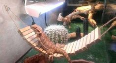 Make a bridge-style hammock for your lizard! Gather square wood dowels for the necessary length of the bridge and drill a hole through either side of each dowel. Bearded Dragon Vivarium, Bearded Dragon Cage, Bearded Dragon Habitat, Pet Lizards, National Pet Day, Baby Dragon, Diy Stuffed Animals, Pet Store, Hammock