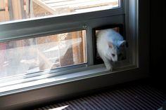 IKEA Hackers: Outdoor Cat Enclosure