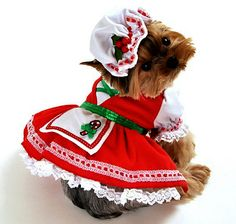 Candy Cane Cutie Christmas Dog Costume
