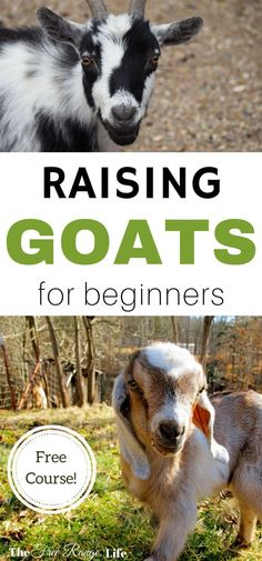 If you are new to raising goats or hope to get goats in the future, check out this free e-course on raising goats for beginners! If you are new to raising goa Raising Goats, Raising Chickens, Goat Care, Future Farms, Mini Farm, Goat Farming, Baby Goats, Mini Goats, Backyard Farming