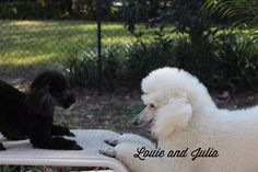 Louie and Julia - Game on!