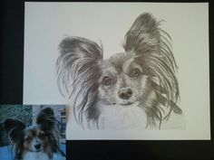 My dog portraits