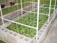 trellis raised bed gardening.  how to, several photos!!