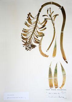 Botanical Print by Clinton Friedman