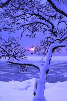Winter Sunset, an unattributed photo found on Disqus. I'd appreciate any additional info.