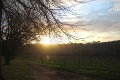 Sunset at Rust En Vrede South African Wine, Rust, Amazing, Travel, Outdoor, Viajes, Outdoors, Destinations, Traveling