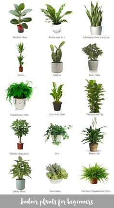 Hi there! A few days ago I collated a blog post on ways you can use plants to decorate your home. Today I thought I'd share an image I put together on some indoor plants for beginners. These would be