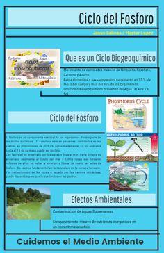 32 Ideas De Ciclos Biogequimicos Química Ciclo Del Nitrógeno Ciclo Del Carbono