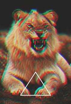 #triangle #lion