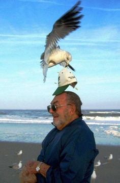 The perfectly timed seagull shoplifting photo: | The 27 Most Perfectly Timed Photos Of The Year
