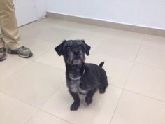 Beltrán ha acudido a nuestra clinica veterinaria para su desparasitación trimestral