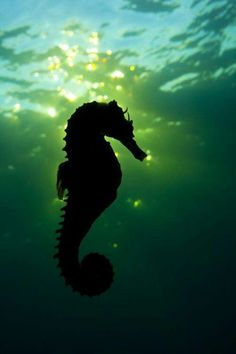Sea Horse and amazing reflection of sun through the water