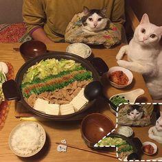 naomiuno 鍋だよ〜 ♨︎ #とり野菜みそ で、とりじゃなくて味噌もつ鍋❤︎ ニンニクも効かせて♩ シメにラーメンにしようと思ったけど、白ご飯に合いすぎる味やしラーメンは明日入れる事にして今日は白ご飯おかわり♩おかわり〜♩ 帰ったら、お父はんが何でか?洗い物してくれててラツキー☆ #八おこめ #ねこ部 #cat #ねこ #八おこめ食べ物 #もつ鍋 #味噌もつ鍋 2017/01/11 00:17:47