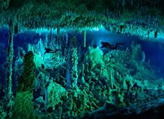 Cave diving in Bahamas