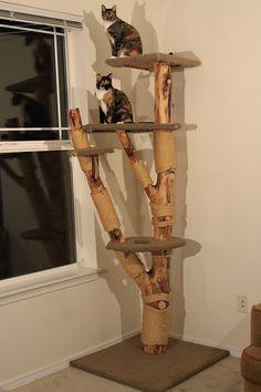 cat climbers - Google Search Cat Climber, Sissi, Climbers, Ladder Decor, Google Search, Cats, Home Decor, Lilac, Gatos