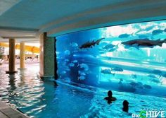 """Water slide through the shark tank at """"The Golden Nugget"""" & swim in the pool surrounding the shark tank."""