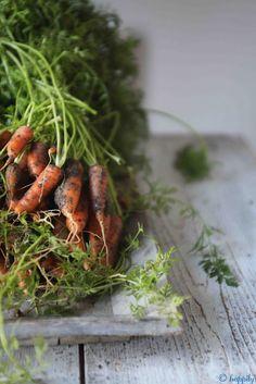 freshly pulled carrots \u2764\u2766\u266a\u266b
