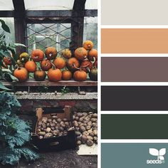 today's inspiration image for { harvested hues } is by @djmight ... thank you, Elena, for another fantastic #SeedsColor image share!