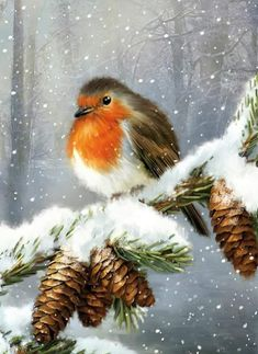 Christmas Scenery, Christmas Bird, Christmas Swags, Christmas Cards To Make, Christmas Past, Christmas Animals, Winter Pictures, Bird Pictures, Christmas Pictures