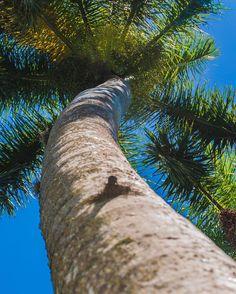 Palm trees in Miami, FL. | 2016