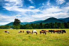 One of the very best ways to experience the beautiful scenery in Cades Cove is on horseback. Cades Cove Riding Stables offers horseback riding tours for people of all levels of experience. Seasoned guides will lead you on horseback rides,…
