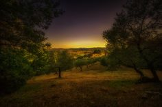 Sunset amongst the olive groves overlooking  the Conti Di San Bonificco wine resort , Gavorrano, Tuscany