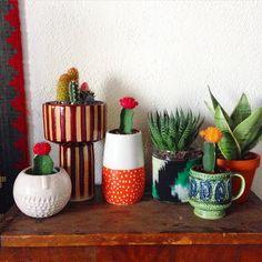 Studio garden growing, justinablakeney's photo on Instagram