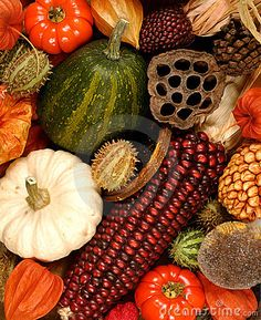 Squash are known to be very good for stomach and colon problems because they contain lots of enzimes and help to digest well and lose weight on your tummy, http://www.ninaohmanarts.com