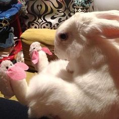 A very serious rabbit wearing bunny slippers.