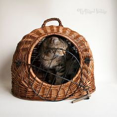0d9d6be3af Vintage Wicker Cat (or small dog) Carrier Basket Cage by UpStagedVintage on  Etsy