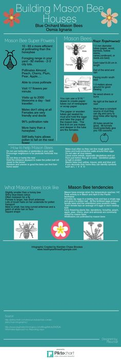 Mason bee houses | Piktochart Visual Editor