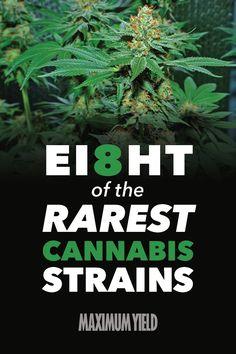 The Rare Cut: 8 of the Rarest Cannabis Strains