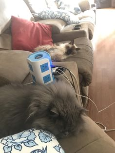 My floofs enjoyed a lazy Sunday with me today. http://ift.tt/2pV4QmG