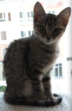 My little Feia when she was tiny. It sounds so cheesy but she was my soulmate. Missing her terribly. <3