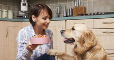 What Human foods that are good for dogs. What people food is healthy for dogs? Here are 11 people foods that you should be feeding your dog. Canned Dog Food, Dry Dog Food, Cat Food, Human Food For Dogs, Diarrhea In Dogs, Pet News, Pet Day, Dog Selfie, Dog Food Recipes