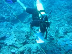 A Peace Corps Volunteer works on a reef preservation project in Fiji.