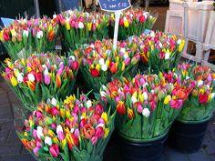 Tulpen op de bloemenmarkt in Amsterdam