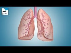 Bronchitis is infection or swelling of the bronchial tubes which are located between nose and lungs. There are many natural cures for bronchitis.