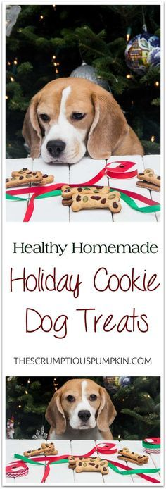Christmas Cookie Dog Treats   An easy, all-natural, DIY dog treat with festive red and green! Perfect for a homemade holiday gift.   The Scrumptious Pumpkin