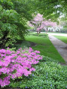"""Spring flowering garden"""