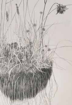 Todays feature is the great naturalistic drawer Ki Yoong . The strenght of Ki `s work, is the sharp eye for details, and that eye is pres. Botanical Drawings, Botanical Illustration, Botanical Prints, Illustration Art, Nature Drawing, Plant Drawing, Yorkshire, Ink Pen Drawings, Black And White Drawing