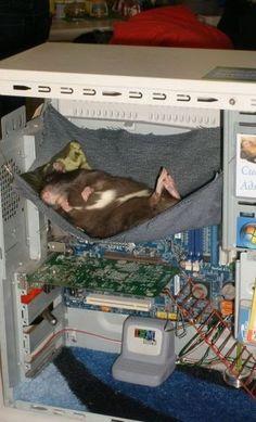 good, ol' hammock ;p