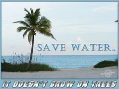 Save water, it does not grow on trees.