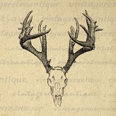 Printable Deer Skull Graphic Deer Digital Image Antlers