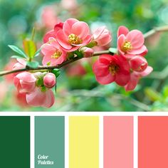 Coral shades with shades of green will look good in a living room. Such bright colors will freshen the room and add energy..