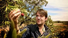 Ten Australian bush foods coming to your plate soon Native Australians, Australian Bush, Health Diet, Natural Remedies, Diet Recipes, Articles, Plate, Foods, Garden
